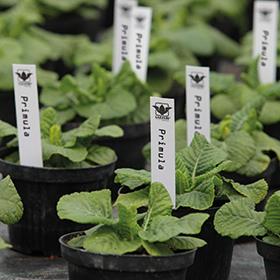Садовые этикетки PlanetFlor на листах А4 тип: Погружающиеся в грунт